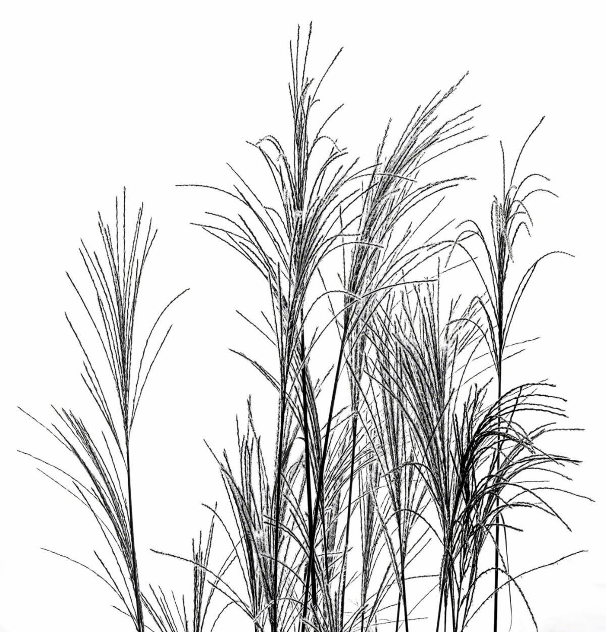 """""""Fall Grass"""" (fine art print), by Bobby Baker, at Bobby Baker Gallery, Cataumet, Mass. Copyright Bobby Baker Fine Art."""
