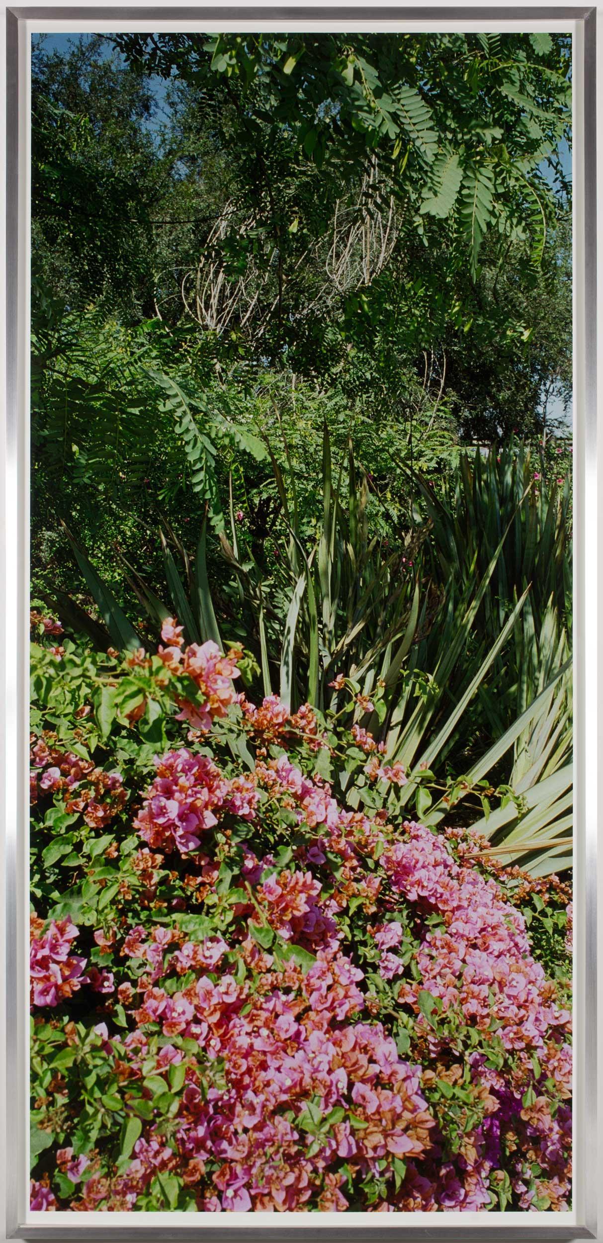 Island Flora #5 (Rte. 405 and Rte. 10 Interchange)    2005   Chromogenic print  99 1/2 x 47 1/2 inches
