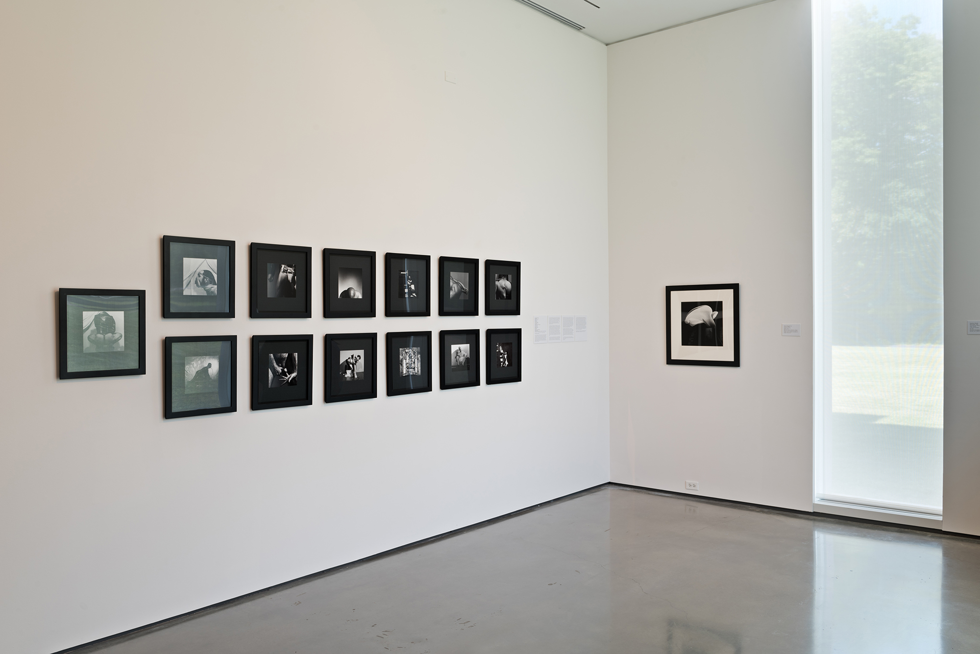 Picture Industry , Hessel Museum, Center for Curatorial Studies, Bard College, Annandale-on-Hudson, NY, 2017.     Robert Mapplethorpe
