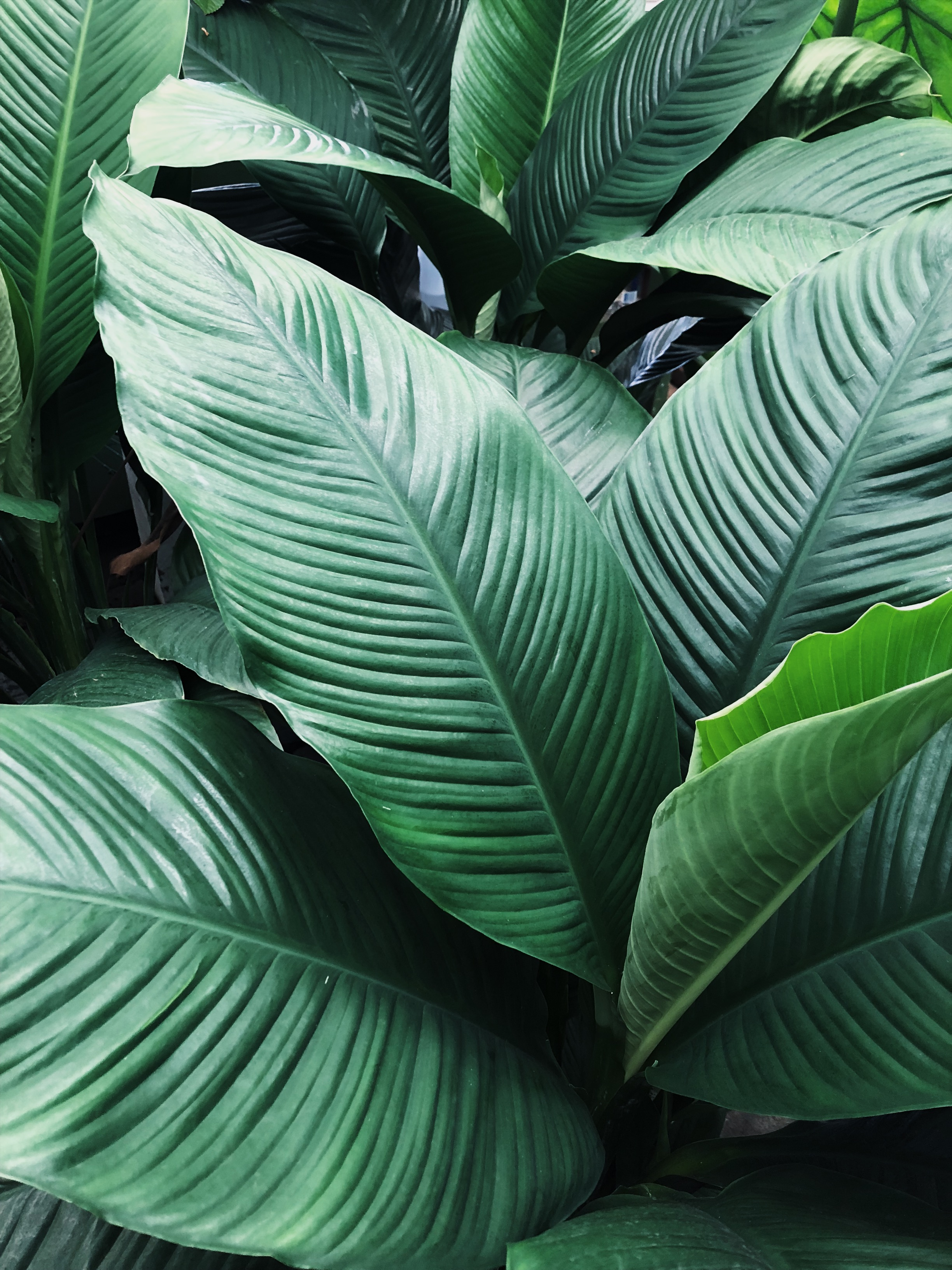 - Care OptionsWhether we helped you choose plants or you chose them on your own, we're happy to help you take care of them. Get in touch with one of our plant care specialists to learn what your plant babies might need or keep scrolling for details on what we can provide.