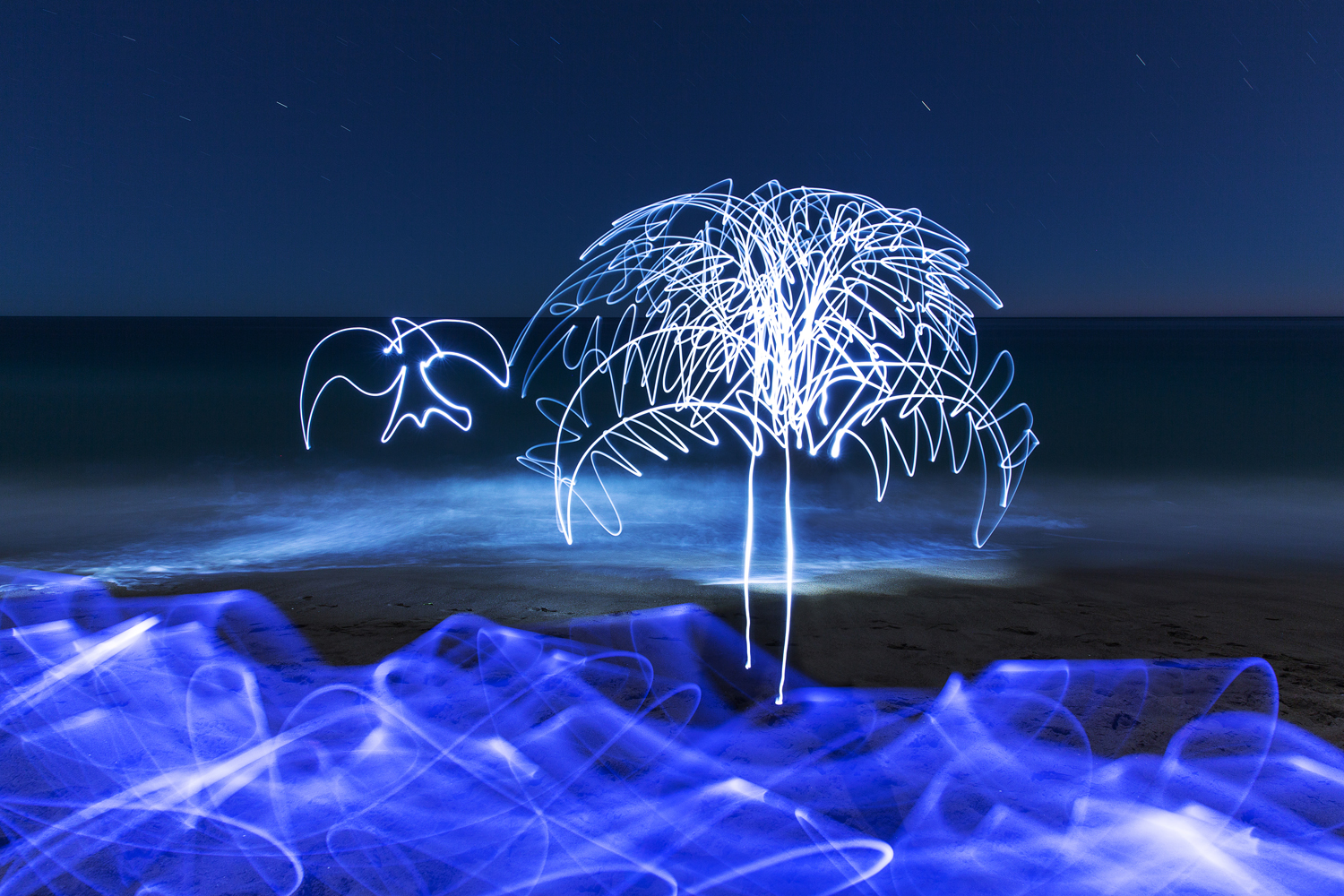 Kelsey Joyce Light painting May2016-2 Sparrow and the Tree Final 1500px.jpg