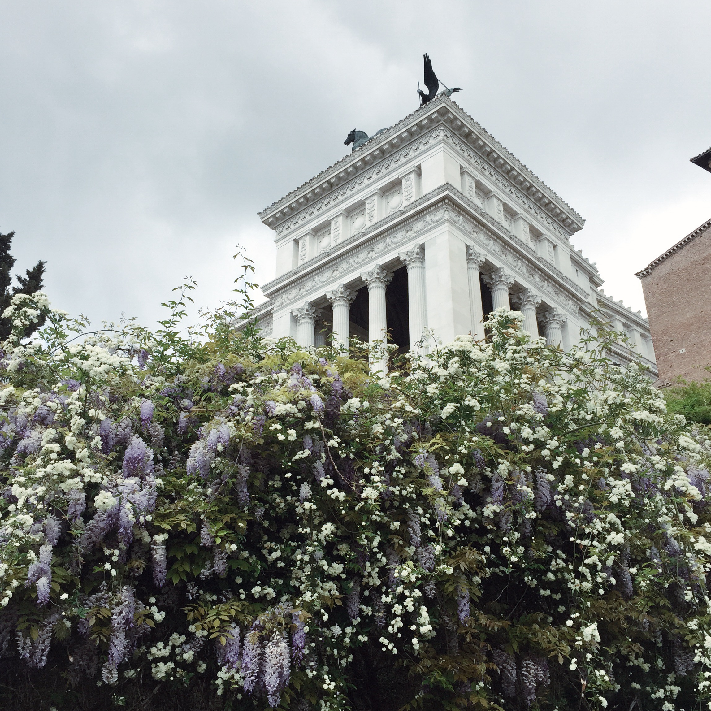 Roses and wisteria in Rome