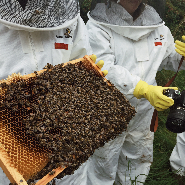 Bee keeping Deans Court Dorset