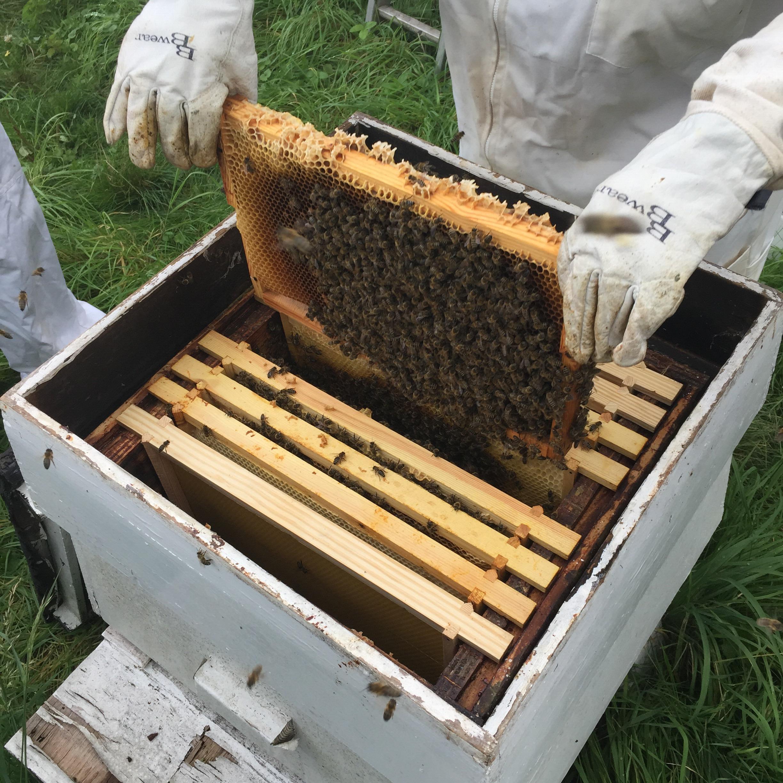 Honeycomb-honey-and-harvest-deans-court-teapot-explodes