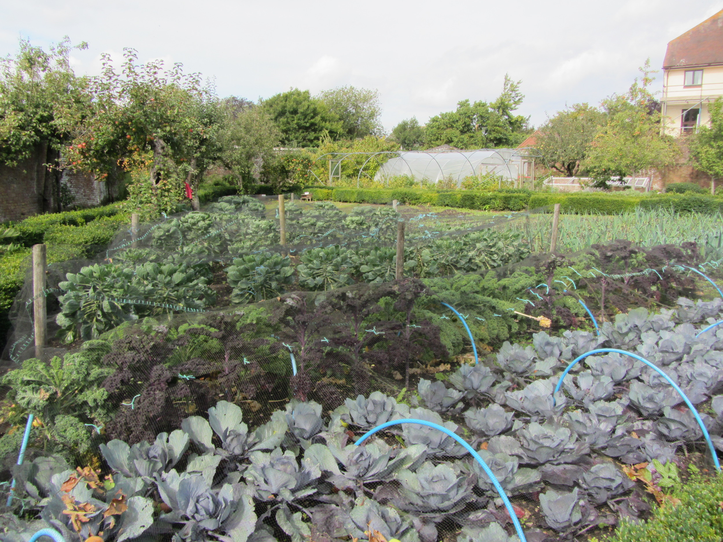 Walled garden at Deans Court, Dorset
