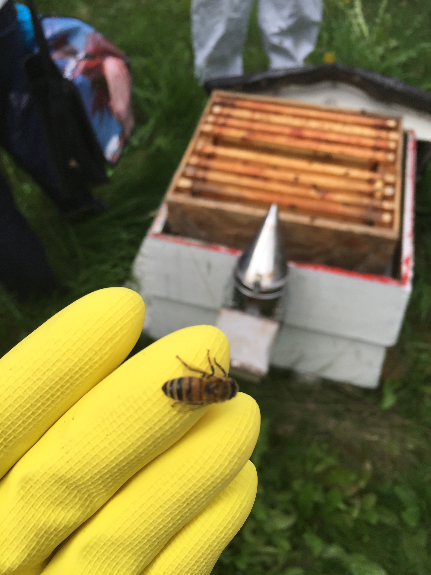 playing-bee-keeper-honey-and-harvest-teapot-explodes