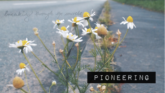A Wildflowers home // febuary theme pioneering aka breaking through the concrete