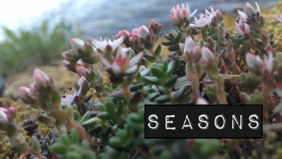 pioneering-1.pngA Wildflowers Home // Seasons // Line thybo møller // Nordhordland / Alversund