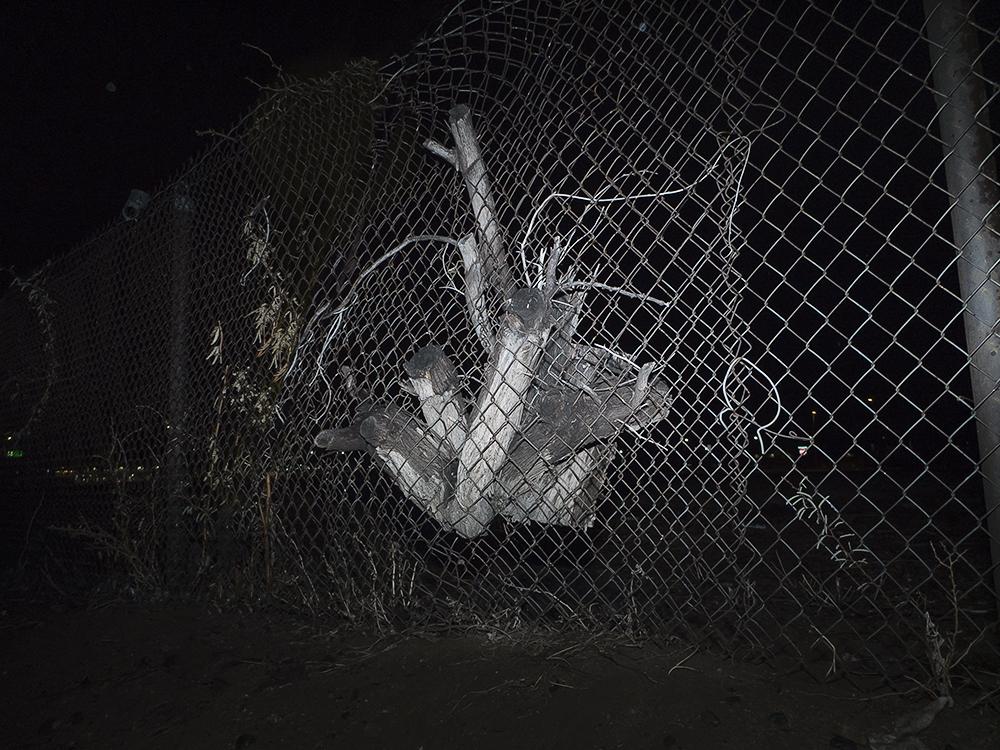 fencetreesm.jpg