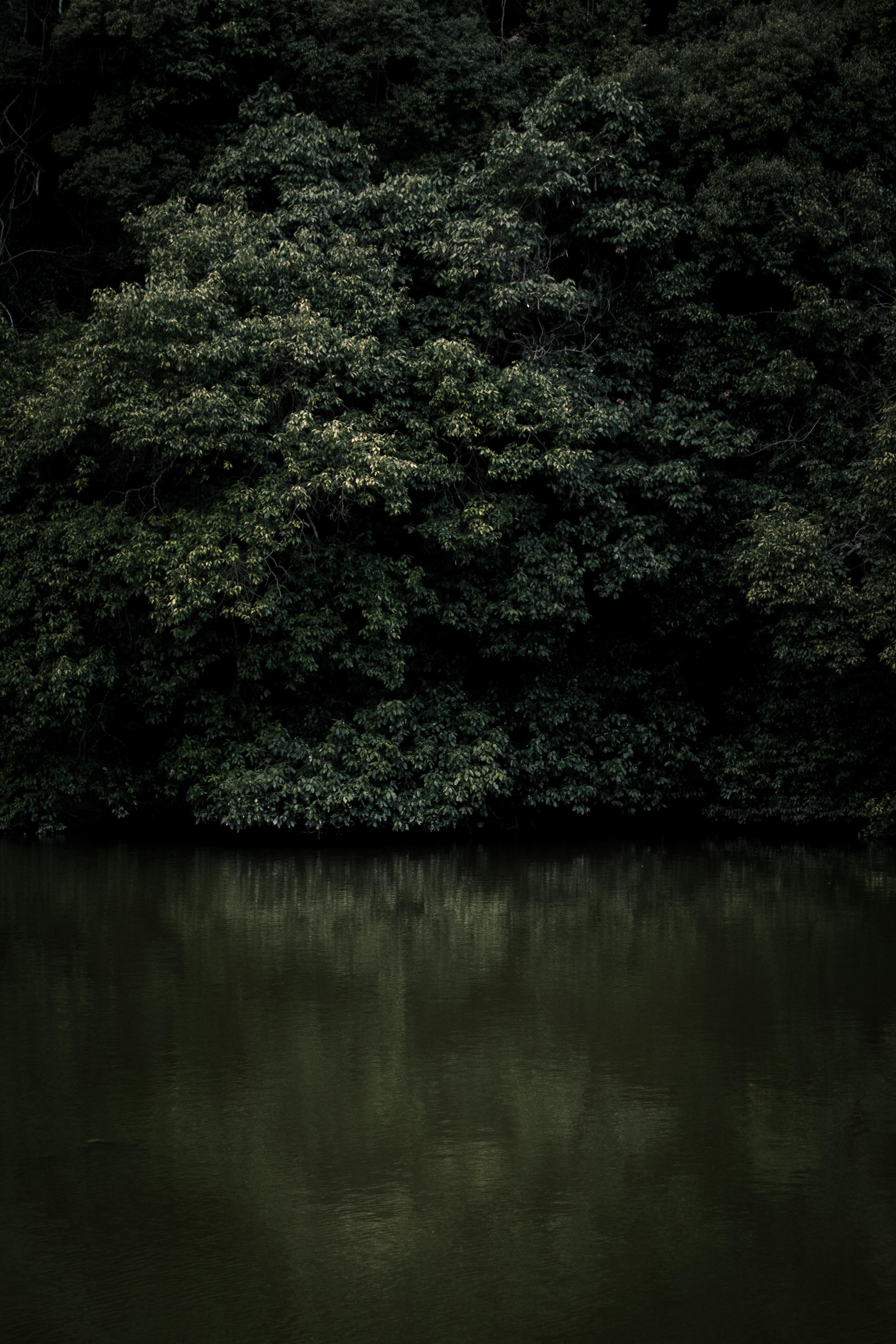 japanese nataure_good_1.jpg