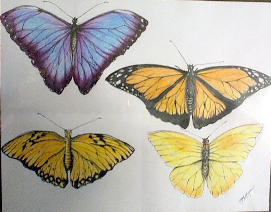 Butterfly-10.jpg