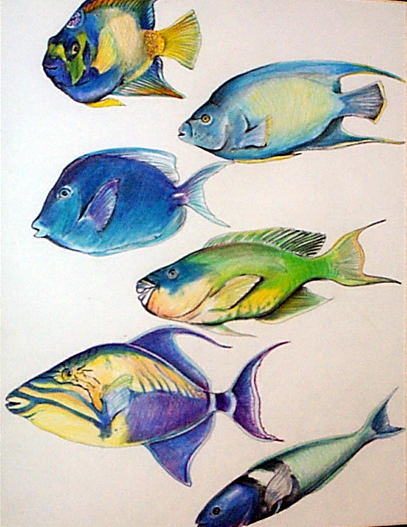 fish2-1.jpg