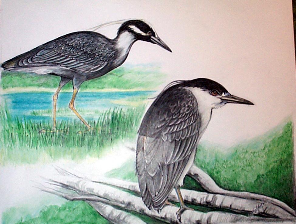 Heron1-1.jpg