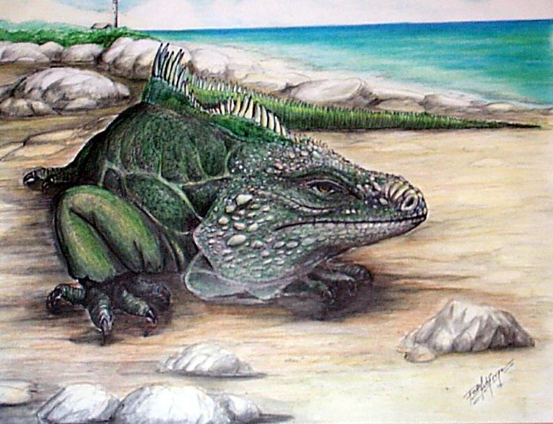 Iguana-6.jpg