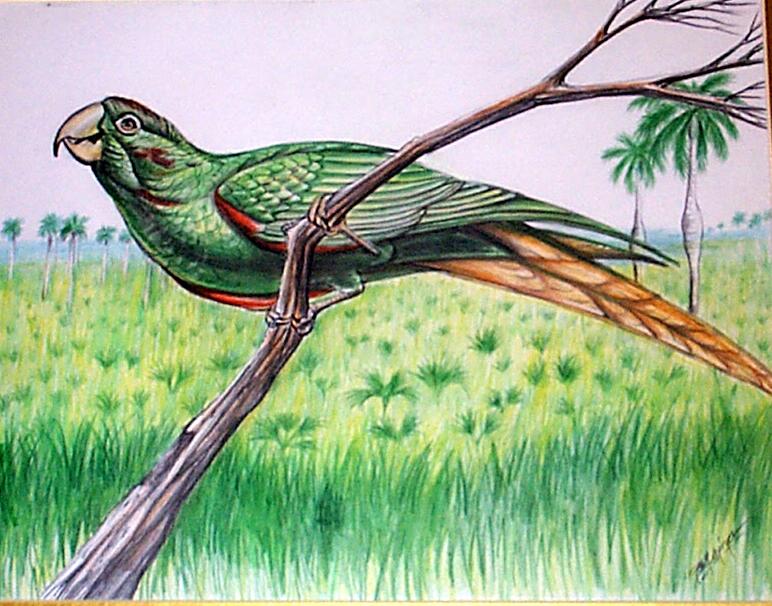 Parrot-2.jpg