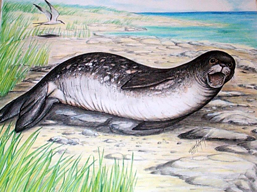 Seal-4.jpg