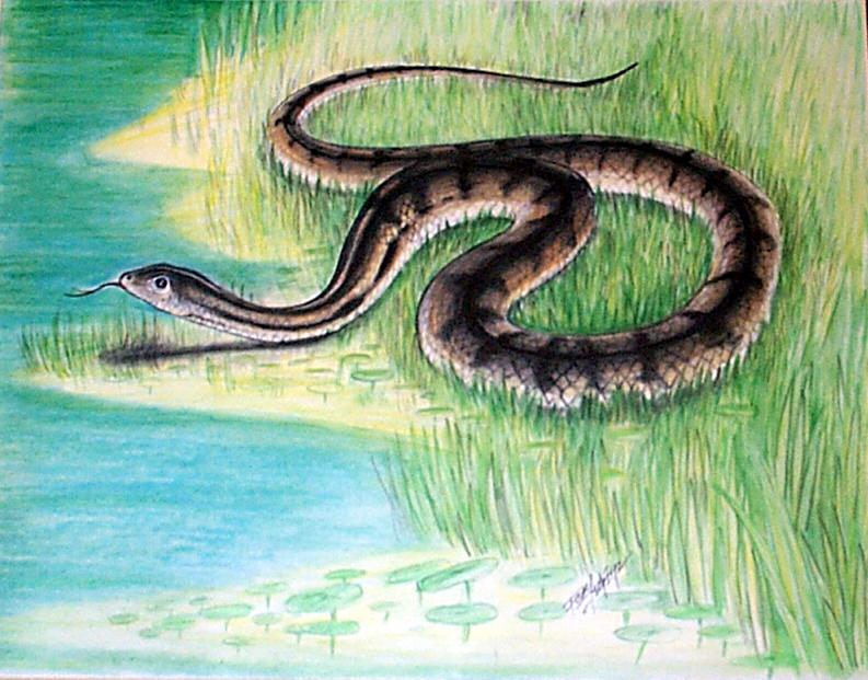 Snake-7.jpg