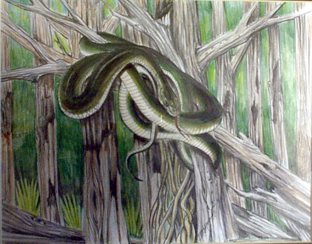 Snake-9.jpg