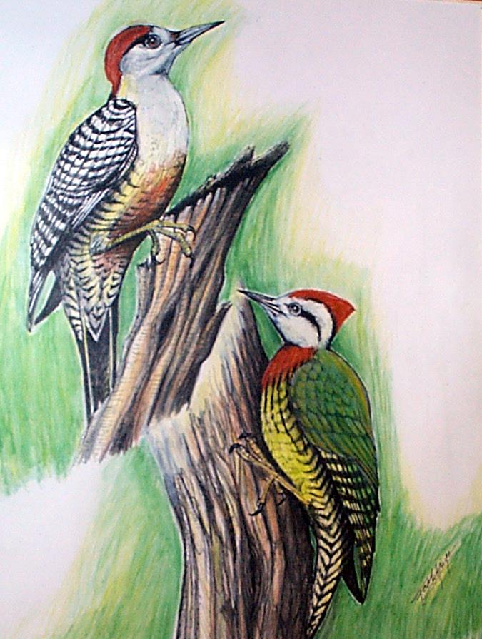 Woodpeck2-8.jpg