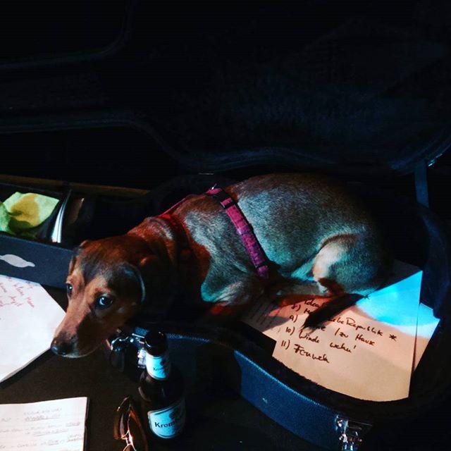Dogs of Dogface: Lulu