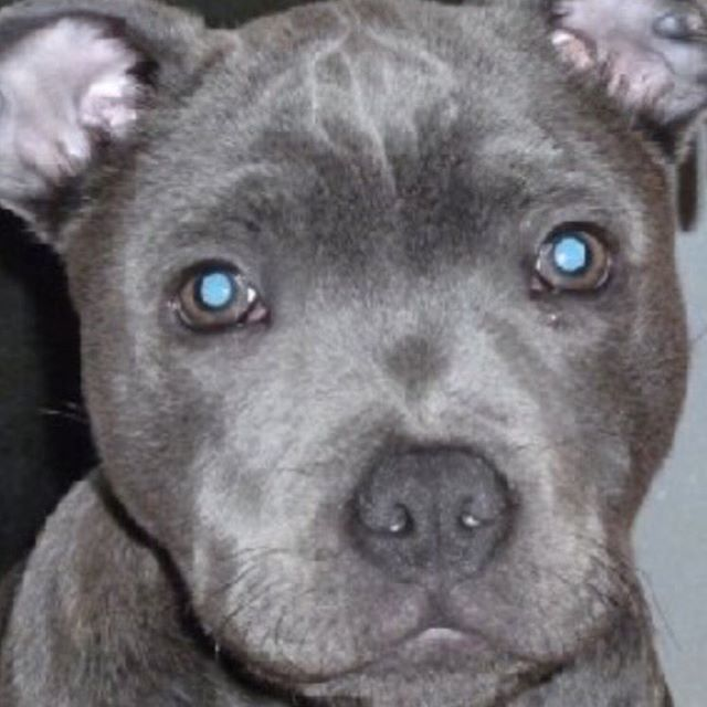 Beautiful baby Blue
