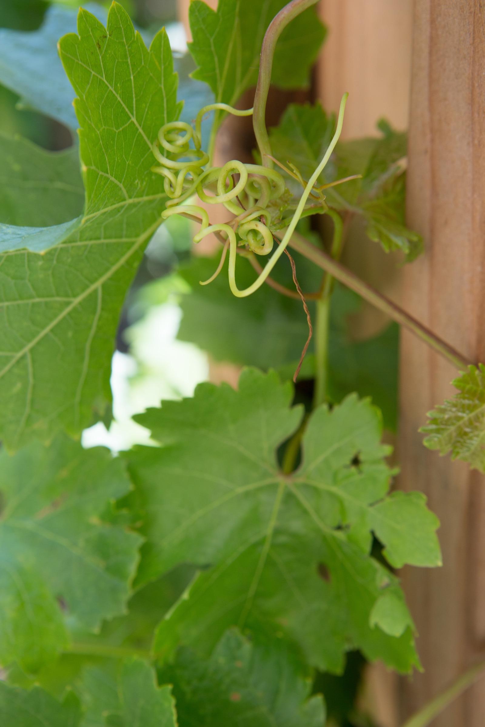 natural earh loop branch-125.jpg
