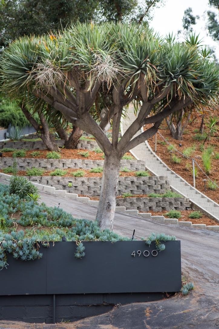 natural earh loop branch-023.jpg