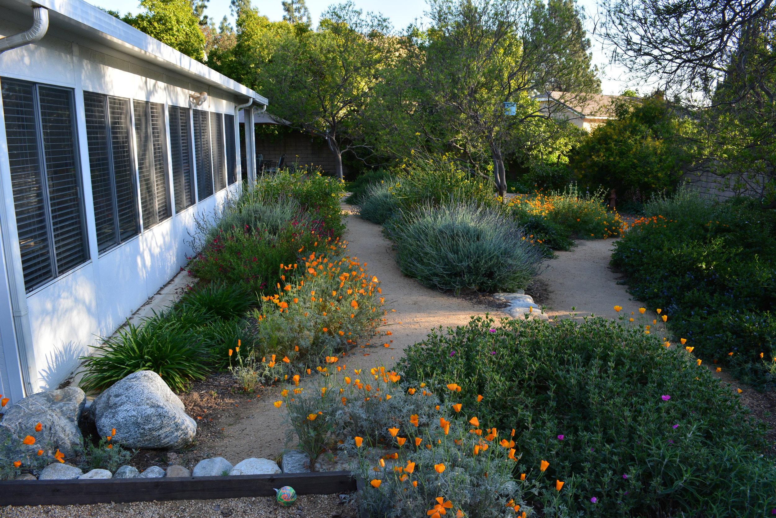 California Native Landscape