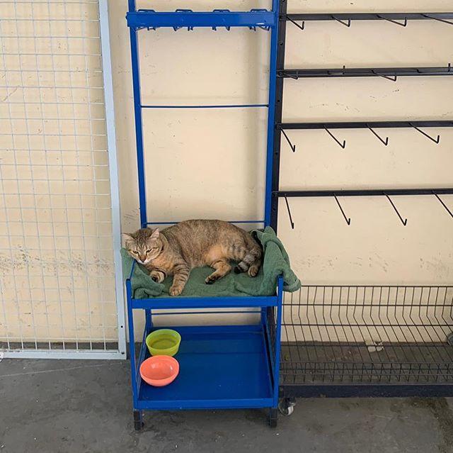 Meet lightbulb, Heng Family Minimart's resident kitty💡(image by @joshualth) #singapore #minimart #kitty