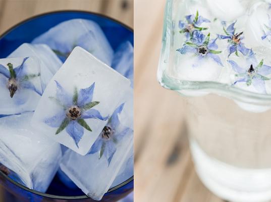 430_Borage flower ice cubes.jpg