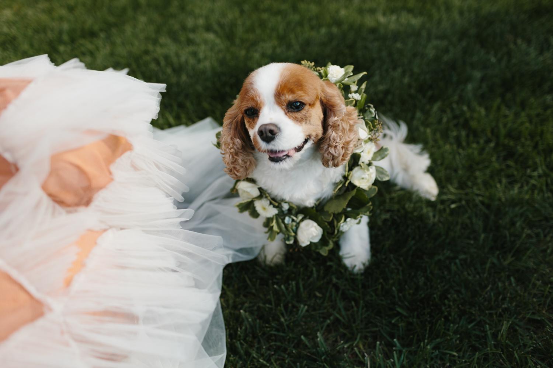 Bloomfield Hills Michigan Wedding Photographer Mae Stier-063.jpg