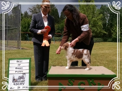 Nanooks first dog show at the age of 9 weeks took Best in Breed Puppy.