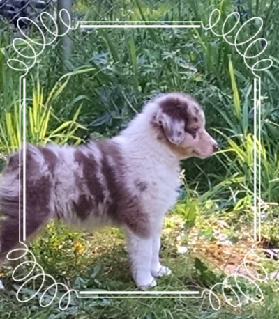Nanooks first day home. Has his eye on the goats already!