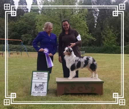 Sitka took reserve to a 5 point major at the Grants Pass ASCVR dog show.