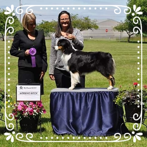 Juneau had a great weekend Memorial Day 2016. She received her first 4 point major as Winners Bitch and a Reserve Winners Bitch to a 3 point major.