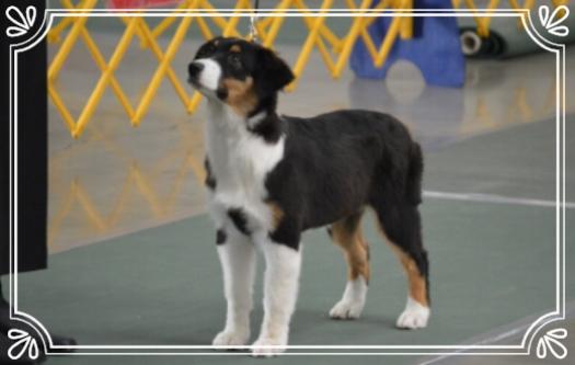 AKC Puppy Group 2
