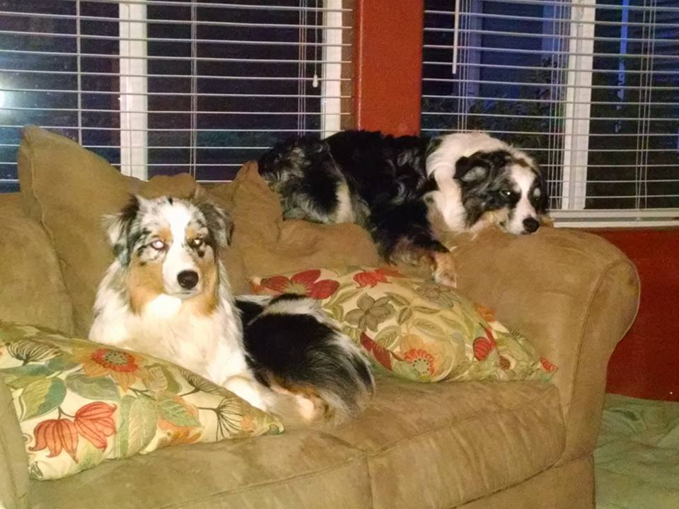 Aussies Relaxing
