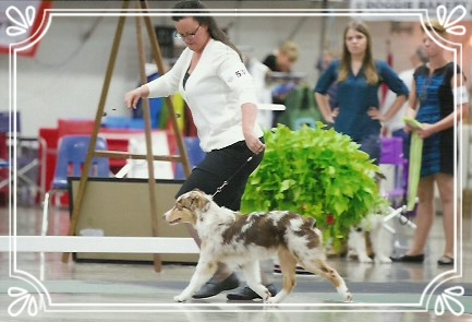 Nanook took his class 3 times at the ASCA Nationals 2016