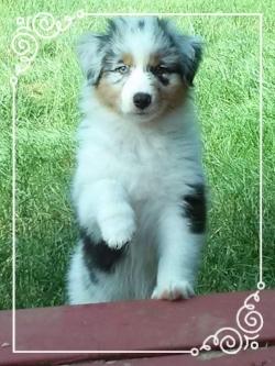Sitaka at 10 weeks