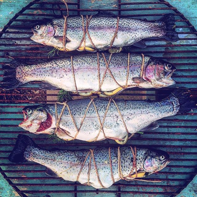 Go Wild Forest School gone fishing.JPG