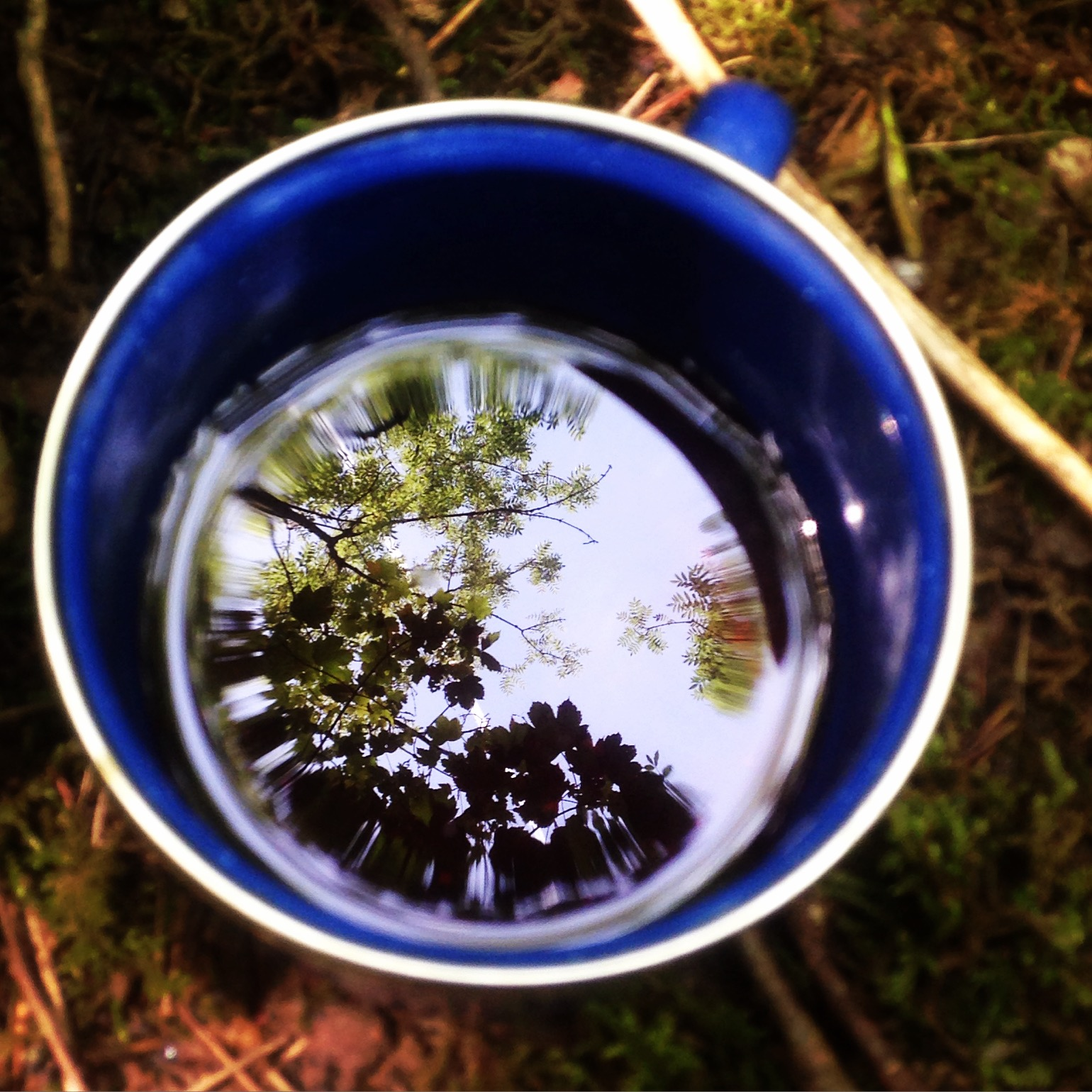 Go Wild Forest School wood reflections in a cup.jpg