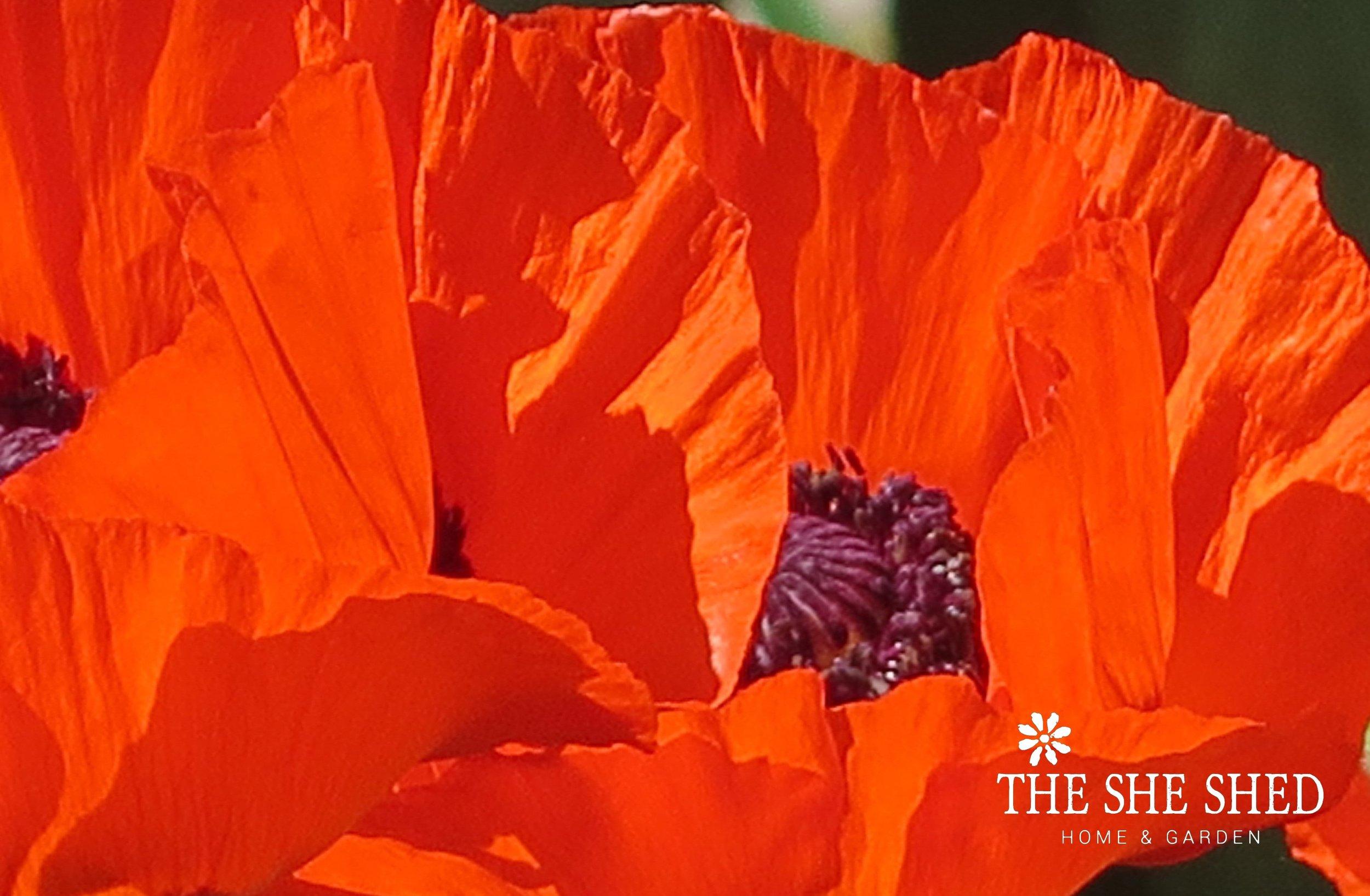 A Poppy final logo.jpg
