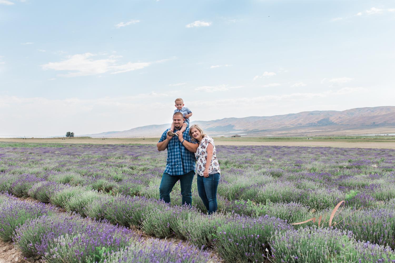 Lavender fields in Mona