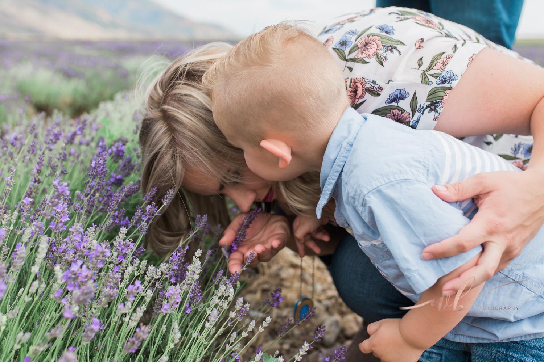 Lavender Fields in Mona Utah