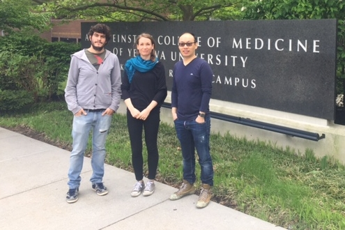 (From left to right) Drs. Madrigal-Matute, Kaludercic, and Chen at the Albert Einstein College of Medicine in NYC