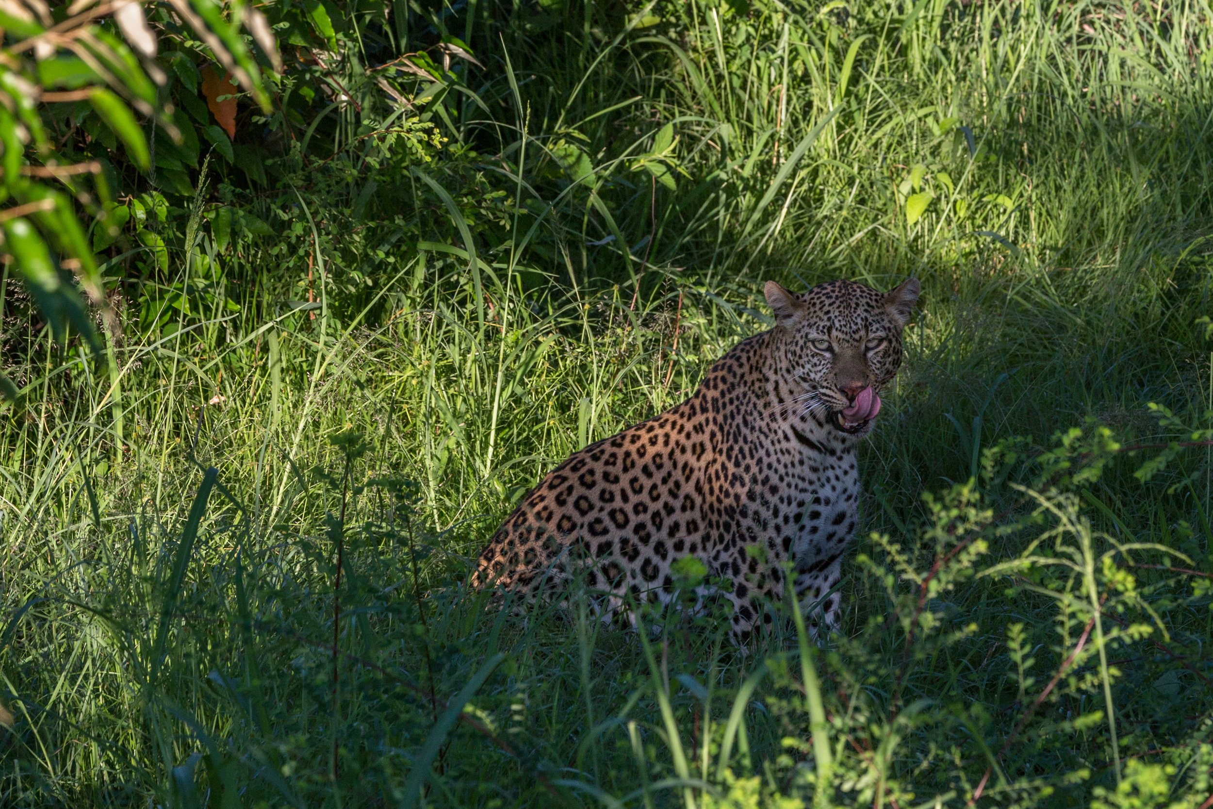 Africa TIF-2.jpg