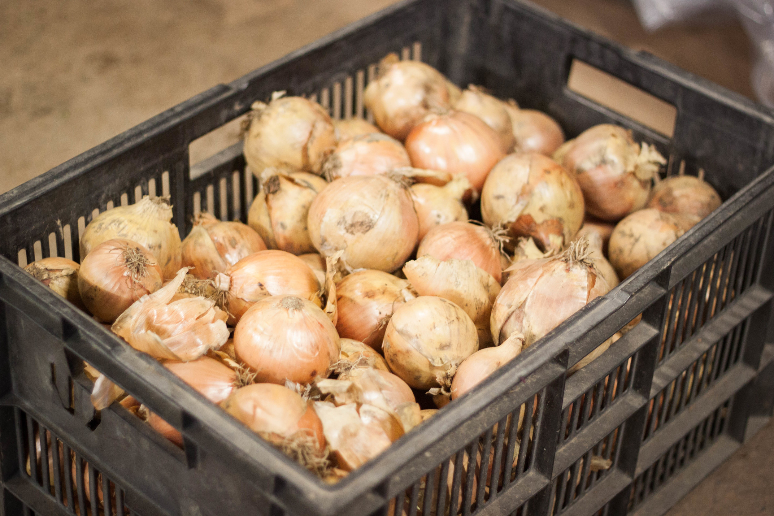 community_farm_onions