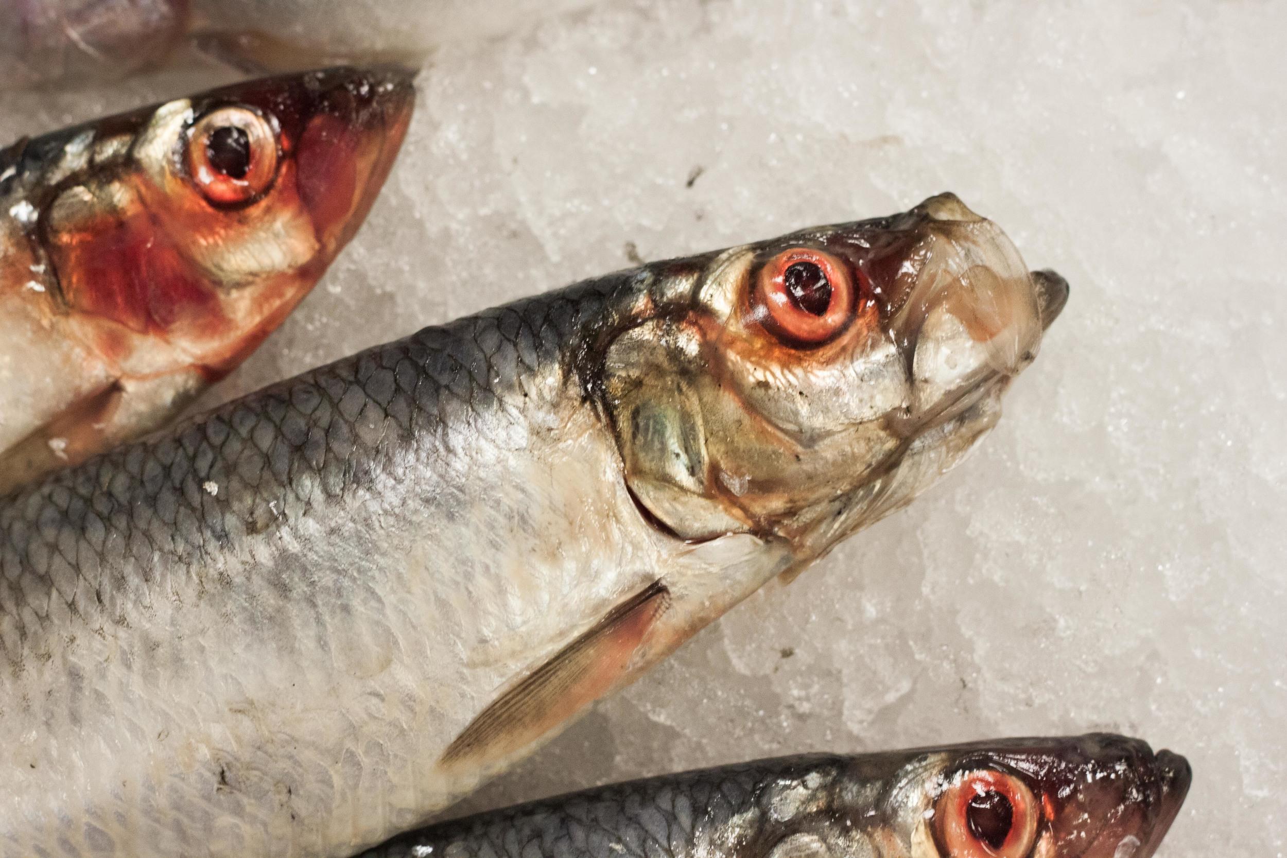 source_fish