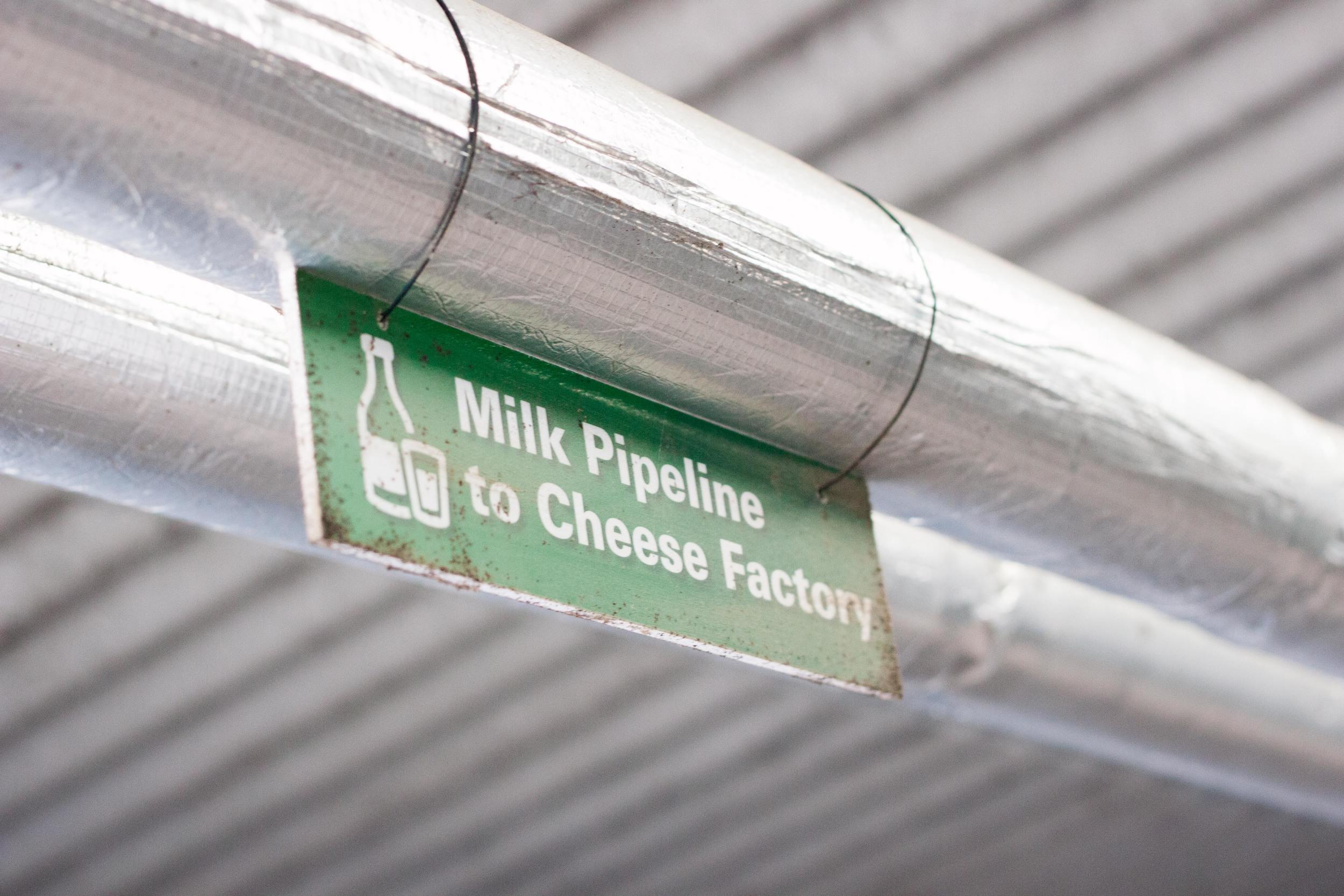 trethowans_dairy_pipeline