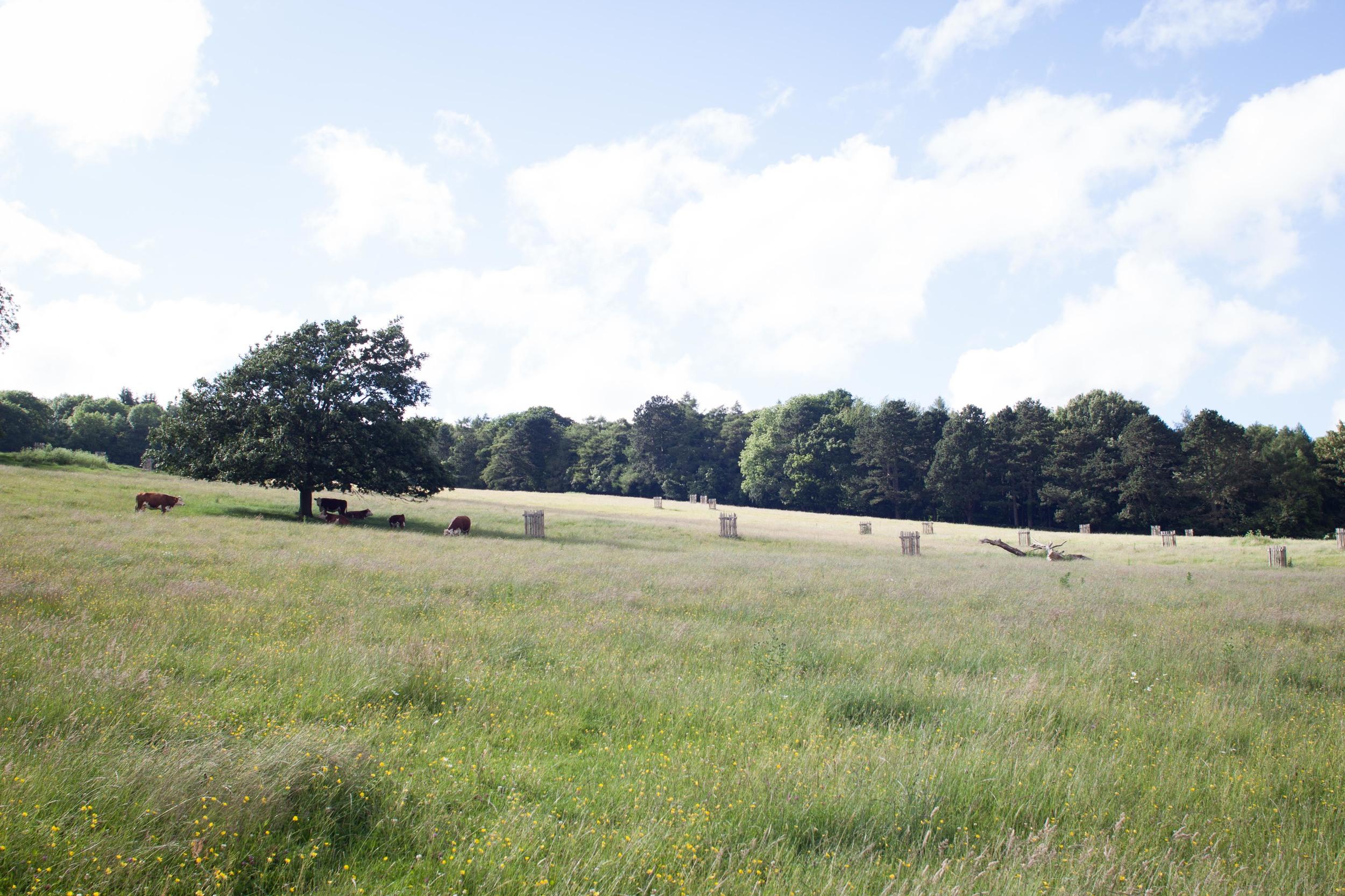 model_farm_cows_hill